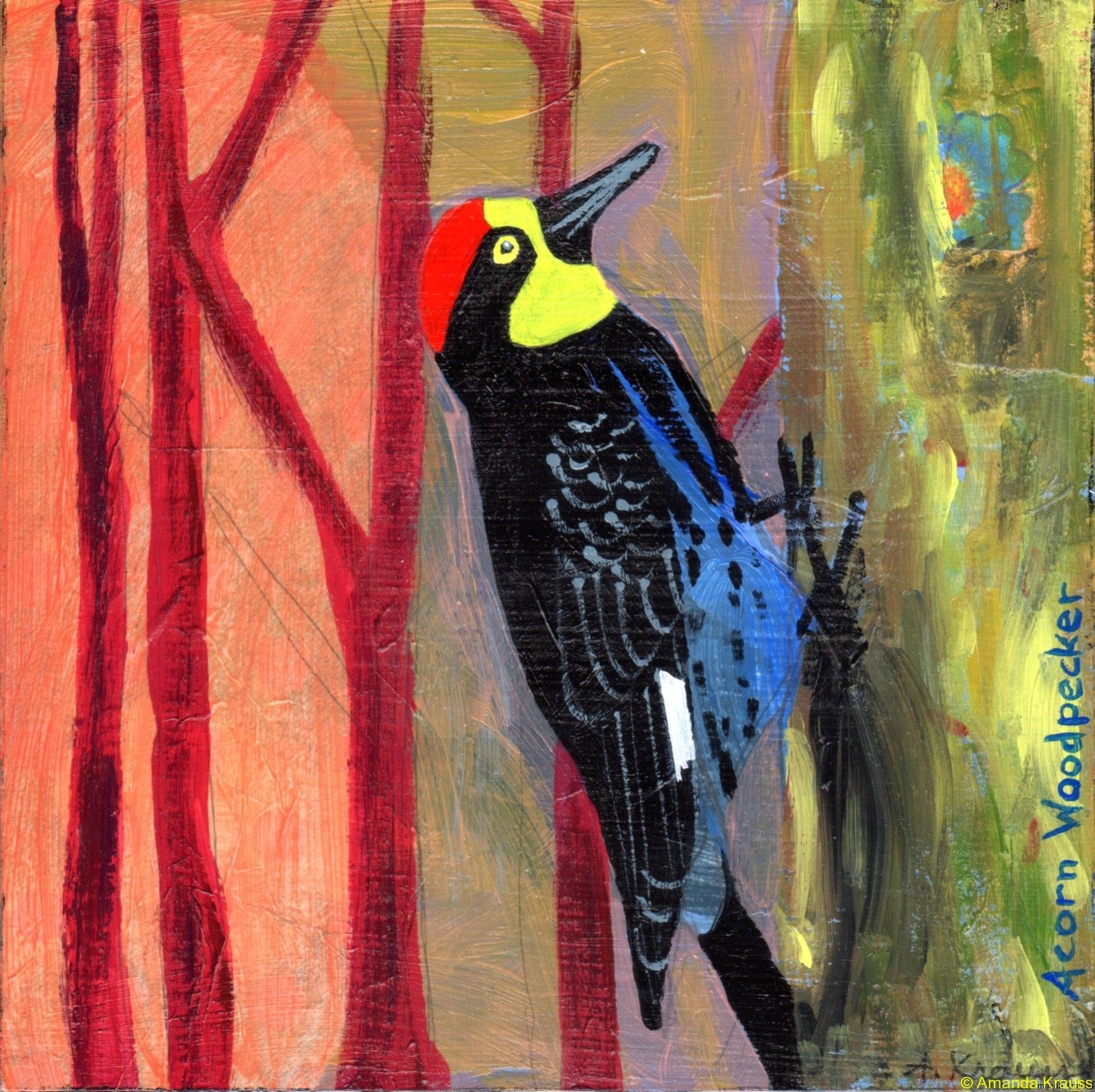 15 acorn-woodpecker015n