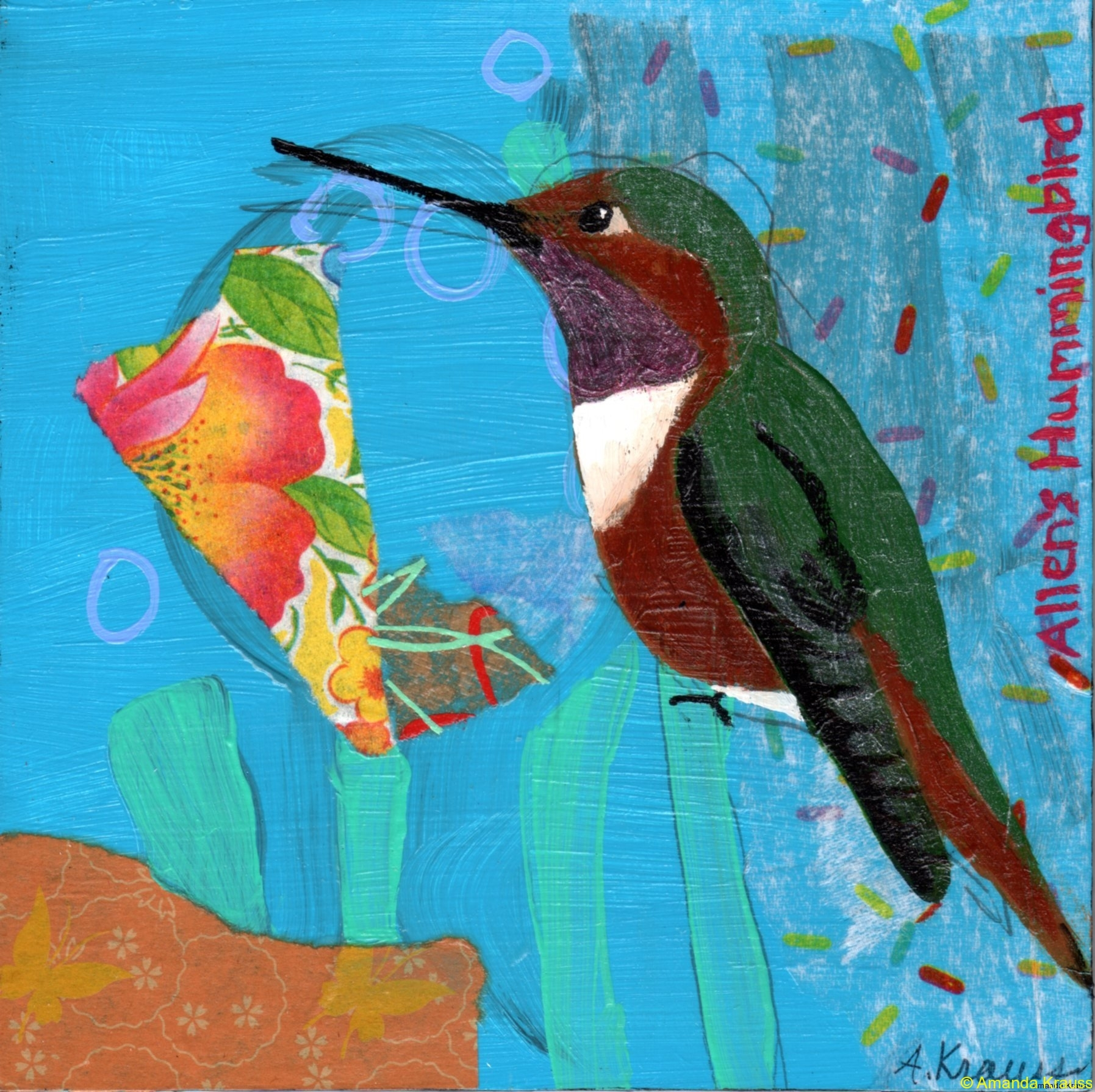 16 allens-hummingbird016o