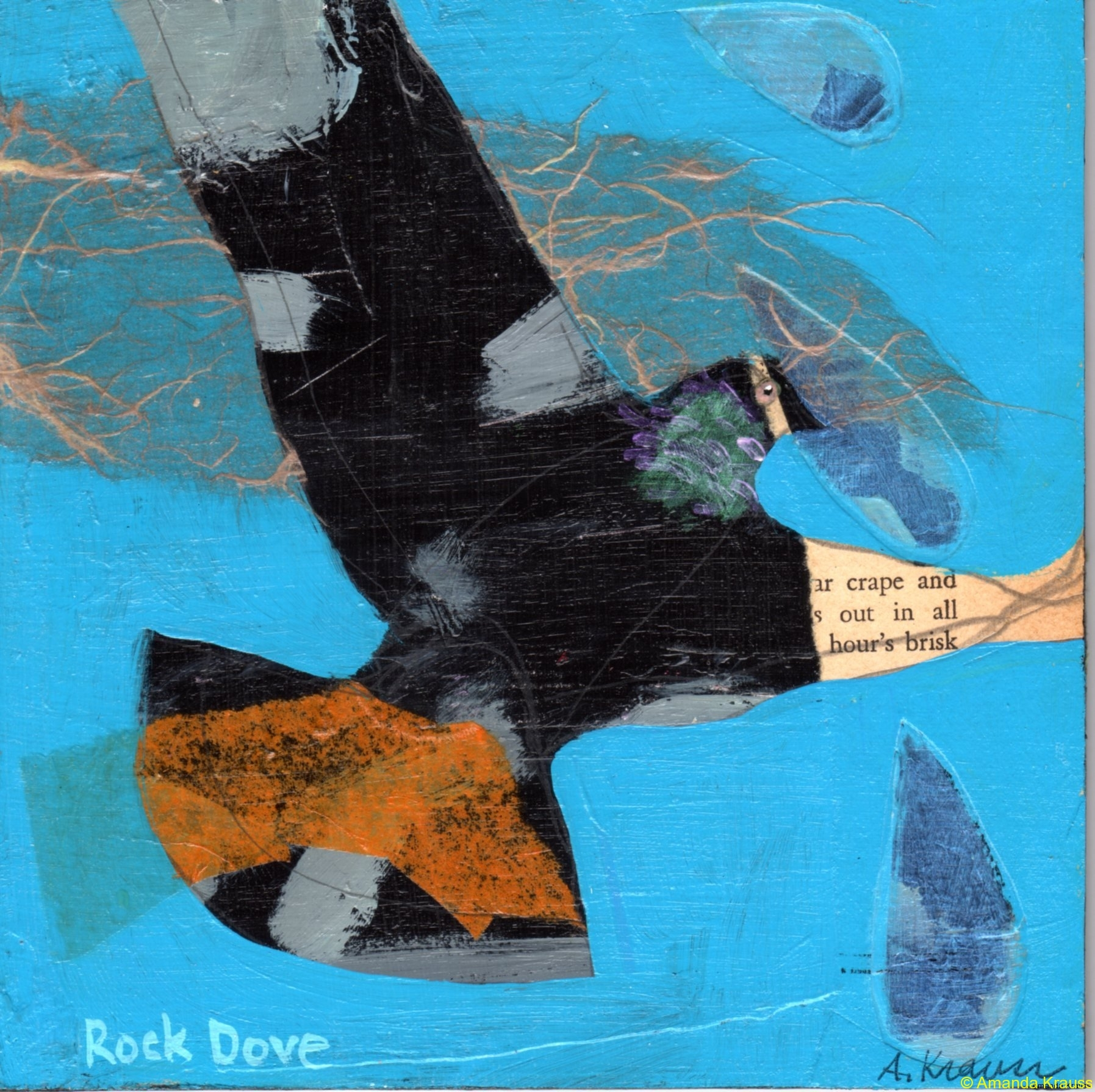32 rock-dove032ac