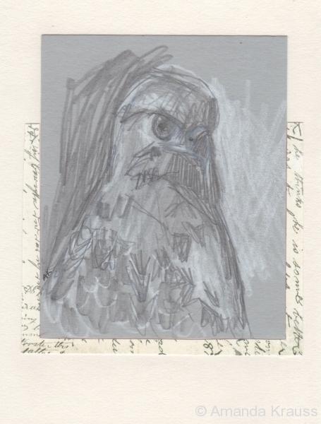 Hawk Notes