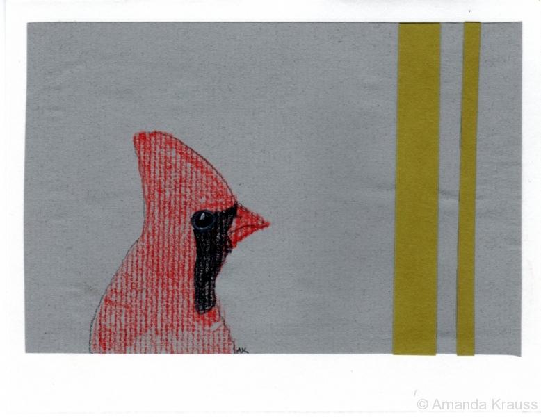 Northern Cardinal010
