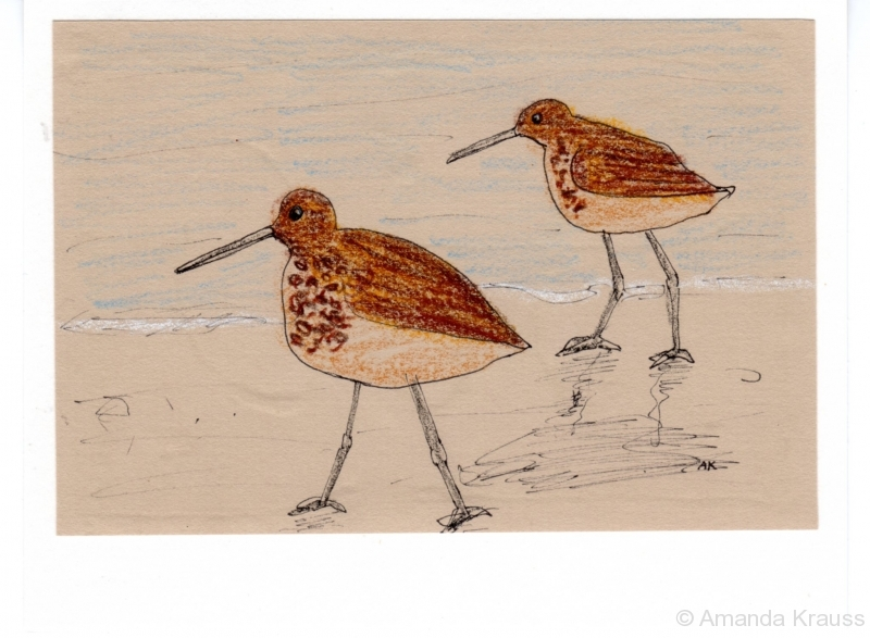 Sandpipers on the Beach004