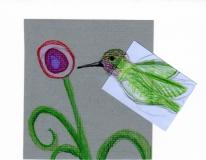 Anna's Hummingbird003