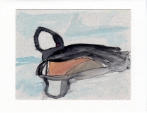 Hooded Merganser014