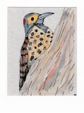 Northern Flicker006
