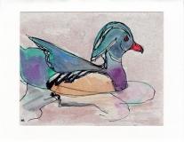 Wood Duck015