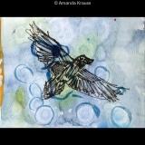 Common Raven Flying